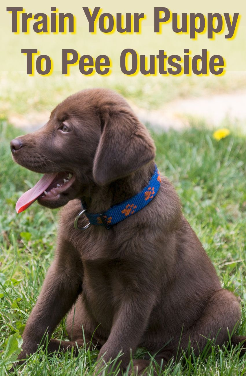 how to train your labrador puppy pdf